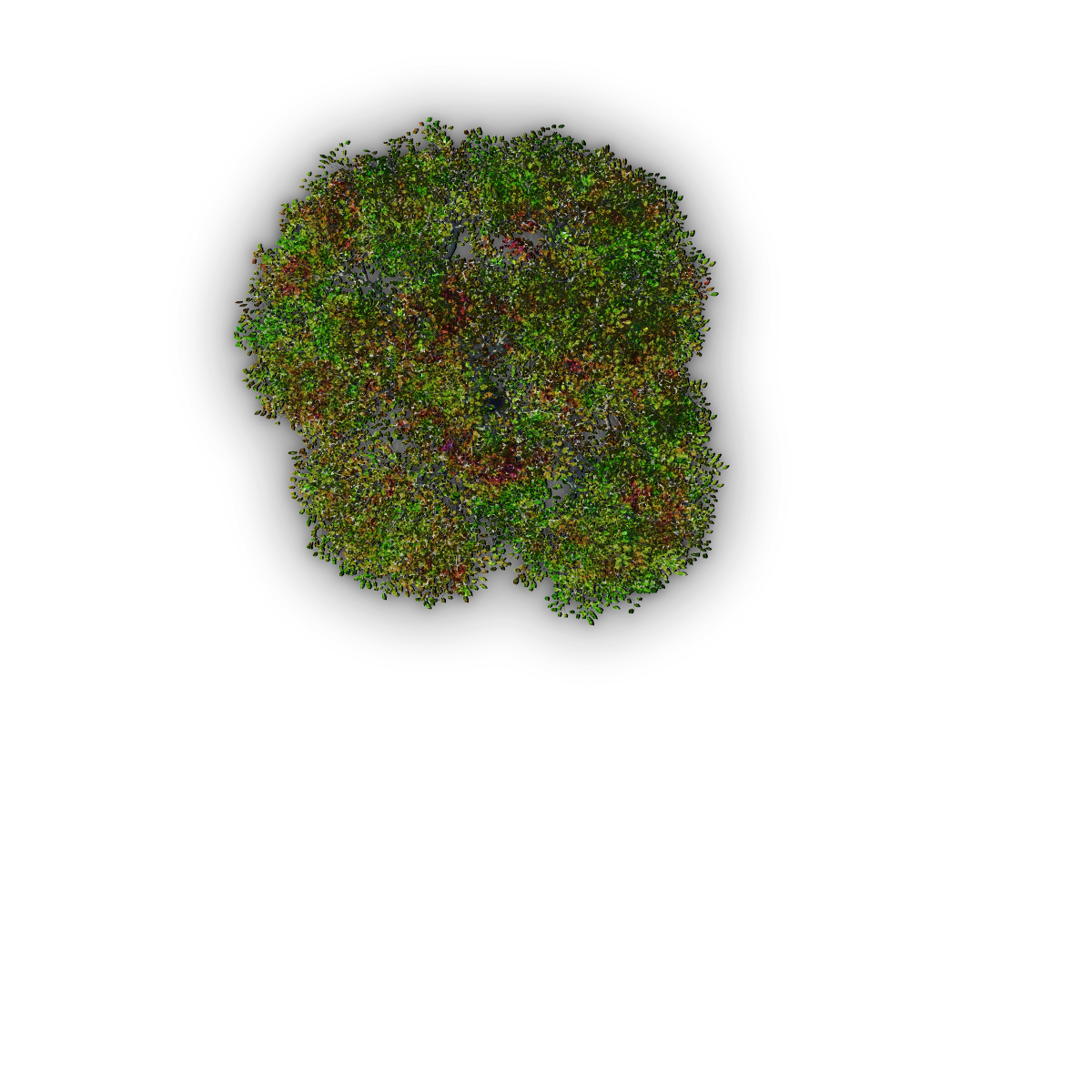Index of /Mapping/Terrain/Plants/Trees