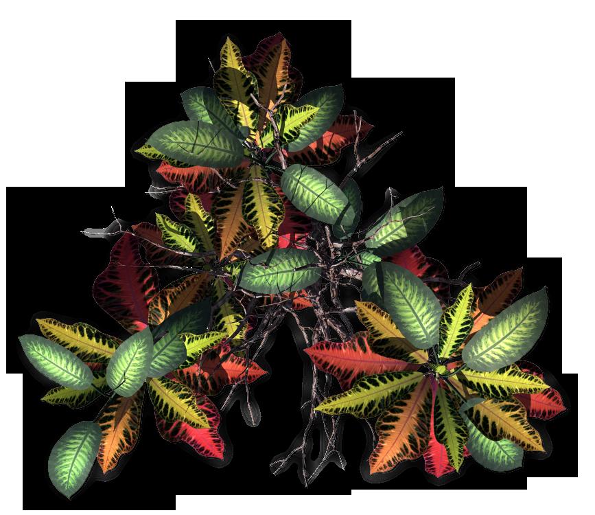 Clipart Jungle Tree